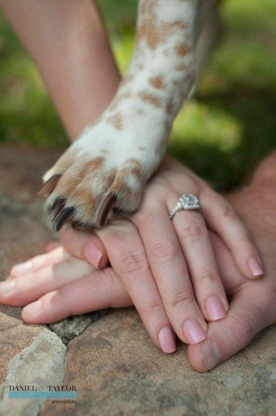 cani a nozze