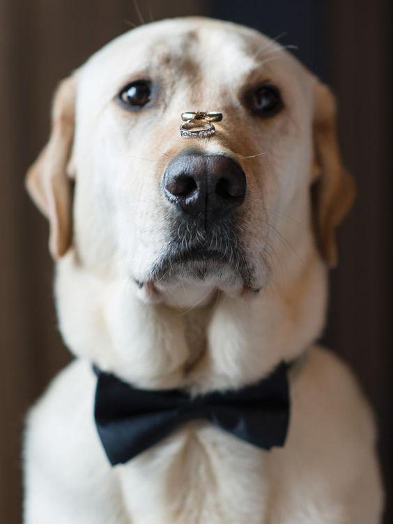 cane al matrimonio