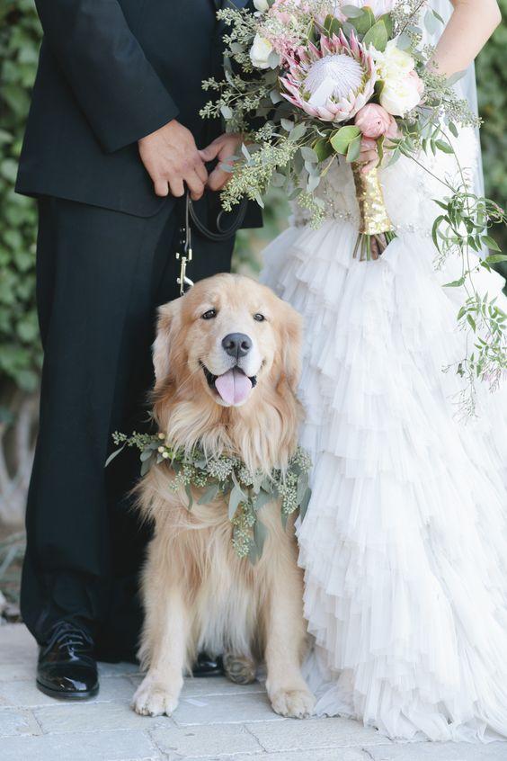 animali alle nozze