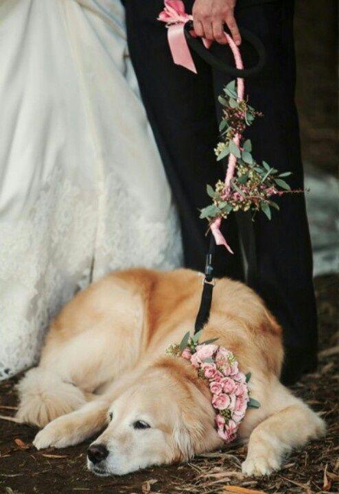 cani alle nozze